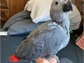 We have both male and female handfed baby Parrots available contact us for more information if inter
