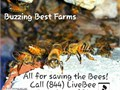 THE BEES NEED YOU AS MUCH AS YOU NEED THEMGIVE US A CALL WELL SAVE THEM ALL844 LIVEBEE 8