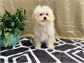 adorable personality that will melt your heart3 sets Dhppv 1set canine bordetella 1 set canine co