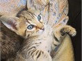 Beautiful Serval kittens looking for a new home They have a beautiful coat and