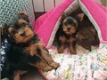 He is very playful and very loving Loves kids and other dogs Price as is He c
