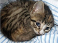 beautiful Bengal kittens for adoption and sale10-12 Weeks oldMust see to ap