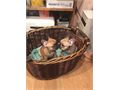 We have the finest cutest French bulldogs puppies female  AKC registered Healthy European Bloodlin