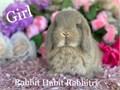 Beautiful very sweet Holland lop Bunnies 8 weeks old 175-200 562-270-8968
