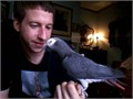 African grey male and female talking birds for sale at 80000 7yrs old dna test