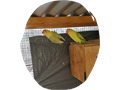 proven pair of yellow face love birdsmale  femaleprice 250 for the paircall or text 818 854
