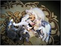 There are 5 kittens up for adoption 4 female and 1 maleThese cute and loving kitties are now 13