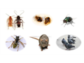 No pest is too hard to remove for good when you call the Earth Guard Pest Services We thrive on qua