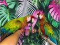 Beautiful Young  Tame Jubilee Macaws for 4500 each Now Shipping Nationwide USA No Emails Please