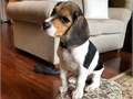 They are excellent with kids and other home pets Awesome pups with great person