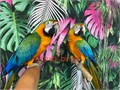 Beautiful Tame and Talking Catalina Macaws for 4800 each Now Shipping Nationwide USA No Emails Pl