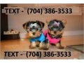 Exceptional quality puppies Current on all shots and worming Potty Trained 1 year Health Guarante