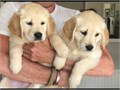 very affordable to anyone because are not for sale adoption only