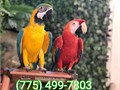 7754997803Well trained birds ready to be adoptedText me if interestedThanks