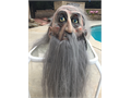 Get ready for Halloween with this great mask Illusive Concepts- gray bearded old man Ready to wear