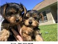 They are still available male and female They are very friendly Good in Behavi