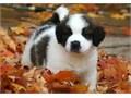 Adorable Saint Bernard Puppiestext us for more details at landrymonica74gmailcomSaint Bernar