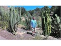 Cardon cacti with various other types available for sale  Prices vary according to the plant  Ple