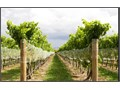 Distinguished Winery in need of agriculturally knowledgeable IRRIGATOR Come join our family of farm