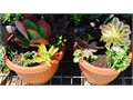 many potted gardens to choose from Cash Only 1183 N Bonnie Beach Place Los Angeles 90063 between Sno