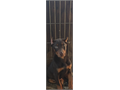 Purebred Doberman pup Female 9 weeks old current shots and dewormings Healthy earscropped red f