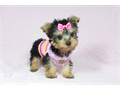 Come visit our website today to find the perfect puppy for youAll of our puppies are small cute
