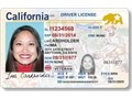 Real uk USA Canadian Germany etc driving licence options perfectly executed and done with great a