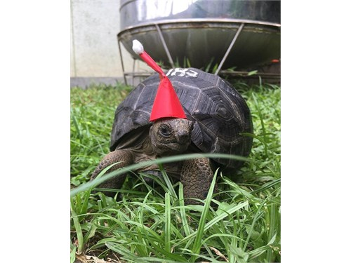 Tortoise available