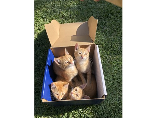 Orange Garfield Cats