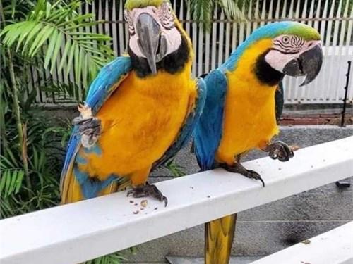 principled Macaw parrots