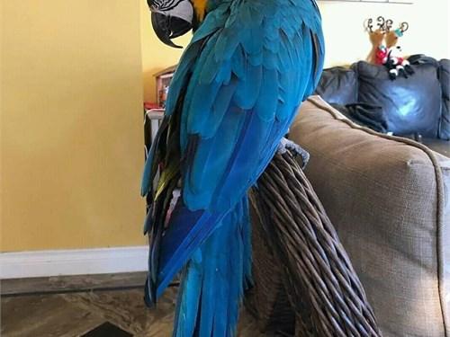 Cute Macaws