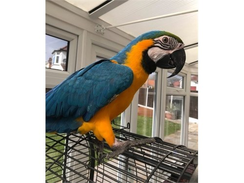 Well Tamed Macaw Parrot.