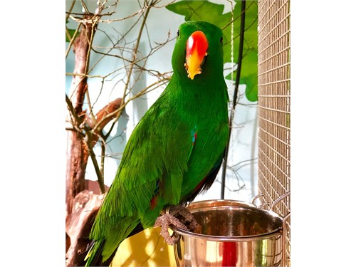 Nice and Healthy parrots