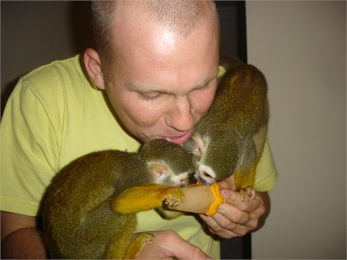 Capuchin Monkeys Babies