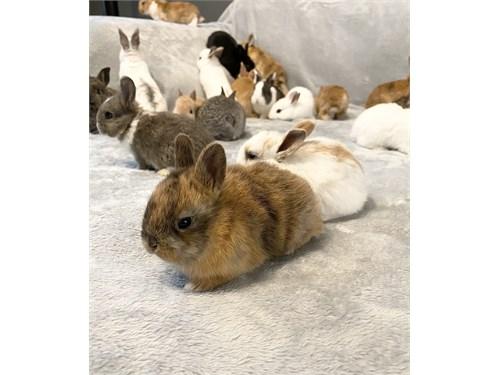Cute baby bunnies, bunny