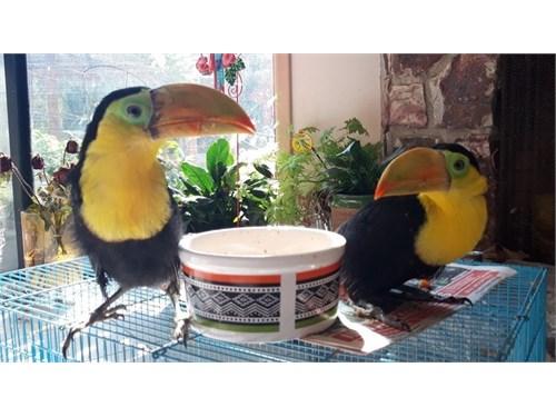 To u can bird;s