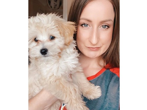 Maltipoo puppy to rehome