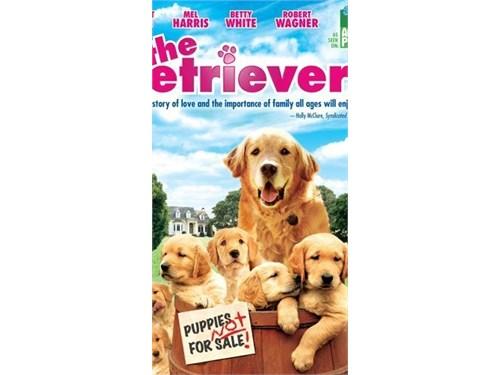 Solo Golden Retriever pup