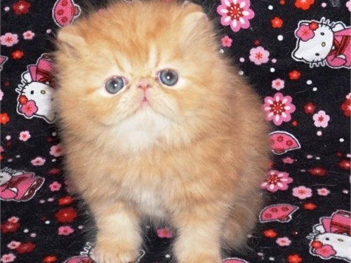 Gorgeous Persian Female!