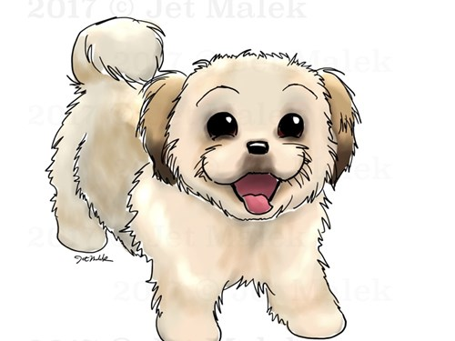 Looking For a Maltipoo