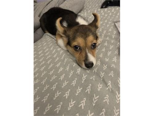 Buy a puppy !