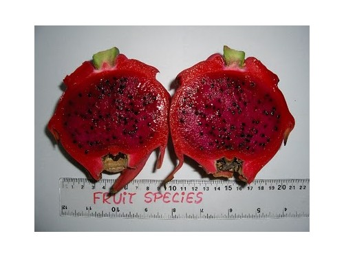 dragon fruit sugar