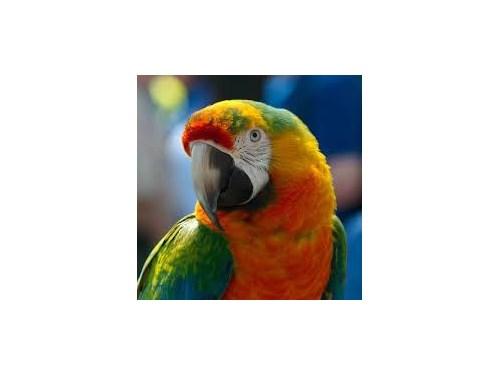 Friendly  Blue Parrot