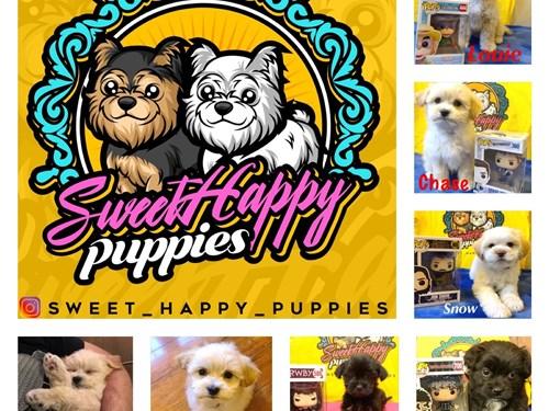 Designer Puppy Breeds