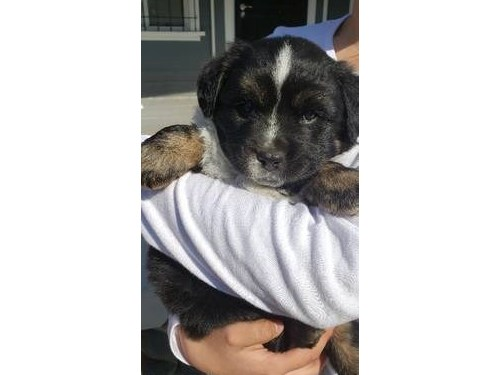 Puppy needs Forever Home