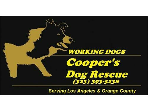 WE RESCUE WORKING DOGS