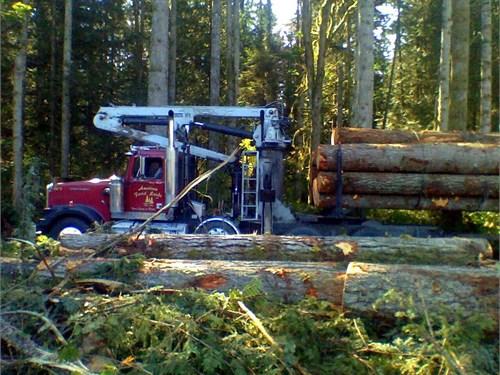 Washington Loggers timber