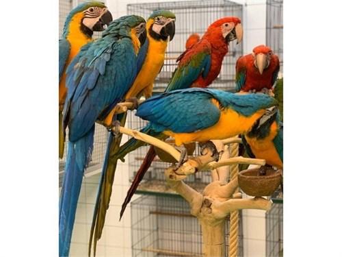 Pure parrots