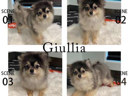Merle Pom, Giullia