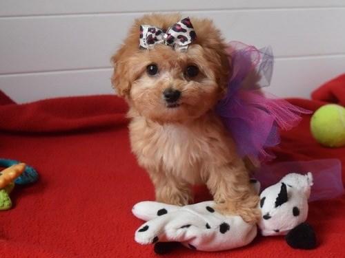 Teddy Bear M.a.l.t.i.p.oo